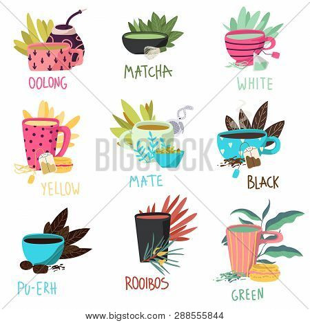 Vector Illustrations Set Of Teacups. Differenet Types Of Tea. Oolong, Matcha, White, Yellow, Mate,