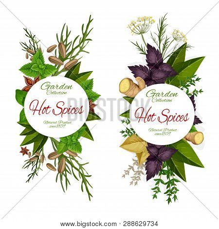 Herbs And Spices, Seasonings Icons, Grocery Store. Cardamom And Ginger, Parsley And Dill, Basil And