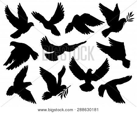 Dove Silhouettes With Olive Branch, Peace Symbol. Vector Pigeon With Spread Wings Flying With Laurel