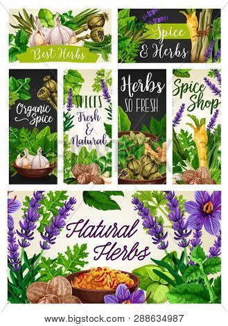 Herbs And Spices, Natural Seasonings, Food Condiments. Vector Garlic And Rosemary, Poppy And Melissa