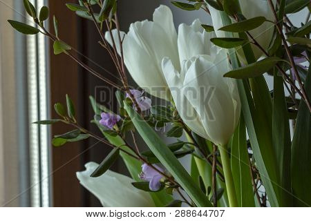 White Tulips In A Bouquet With Rhododendron Look Out The Window. Sprigs Of Rhododendron And A Wall W