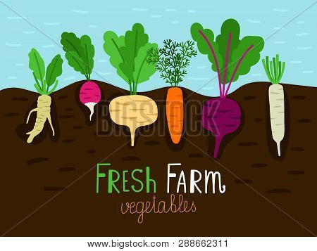 Vegetables Garden Growing. Vegetable Gardening Sketch, Family Farm Food Grow With Roots In Ground, V