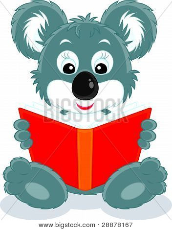 Koala cub reading a book
