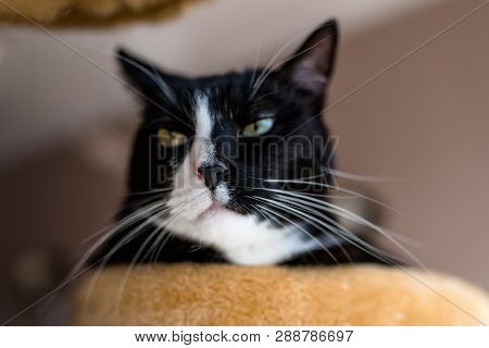 A Black Cat With A Black And White Snout, Lies On A Brown, Cat Scratcher Inside The Home.