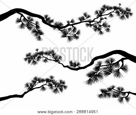 Long Elegant Pine Tree Branches - Black And White Conifer Tree Vector Silhouette Set