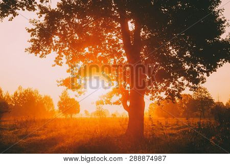 Sunset Or Sunrise In Misty Forest Landscape. Sun Sunshine With Natural Sunlight Through Oak Wood Tre