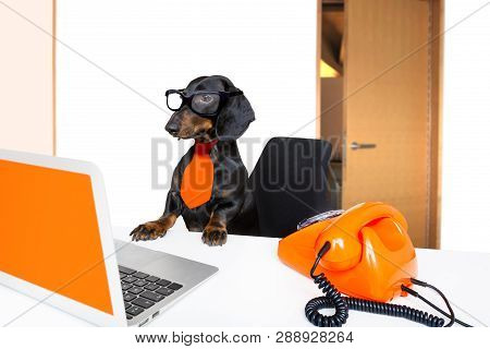 Sausage Dachshund Dog With Glasses As Secretary Or Operator With Red Old  Dial Telephone Or Retro Cl