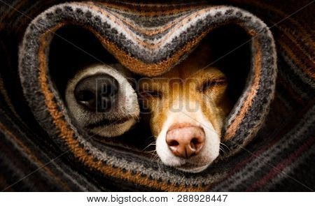 Couple Of Dogs In Love Sleeping Together Under The Blanket In Bed In Heart Form,  Warm And Cozy And