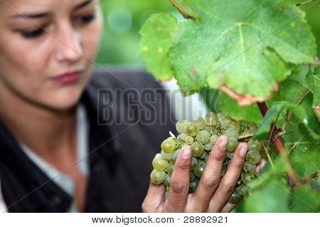Woman stood by grape vine