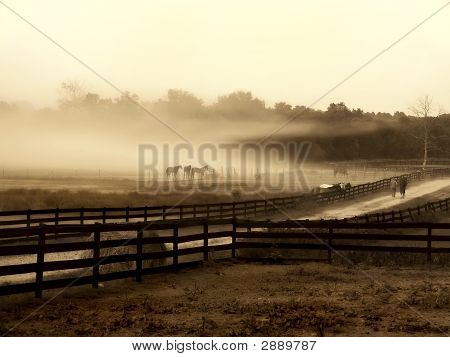 poster of Fog cloud on a horse farm. Horses sit and relax at the edge of the field in the fog.