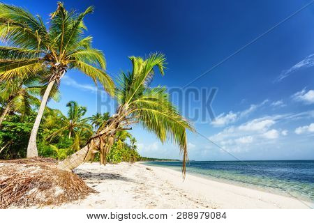 Palm trees on beautiful tropical sunny beach in Dominican republic