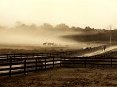 Fog cloud on a horse farm. Horses sit and relax at the edge of the field in the fog. poster