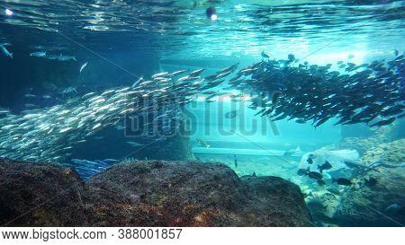 School Of Fish In A Saltwater Aquarium