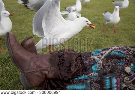 A Woman's Legs Covered With Long Skirt Is Surrounded By Seagulls. One Of The Birds Is Eating Potato