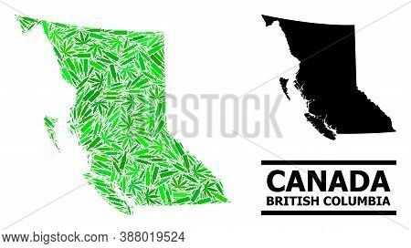 Addiction Mosaic And Solid Map Of British Columbia Province. Vector Map Of British Columbia Province
