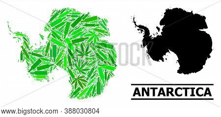 Addiction Mosaic And Solid Map Of Antarctica. Vector Map Of Antarctica Is Shaped With Scattered Vacc
