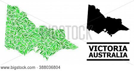 Drugs Mosaic And Solid Map Of Australian Victoria. Vector Map Of Australian Victoria Is Shaped Of Sc