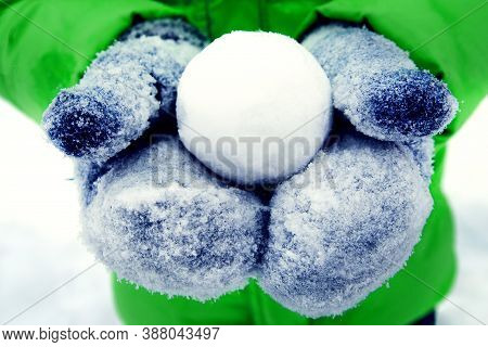 Perfectly Flat Snowball In Hands. Person Holding Snowball. Close-up Of Cropped Hands Holding Snowbal