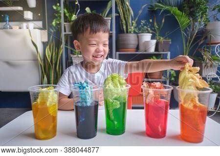 Asian Kindergarten Boy Having Fun Making Rainbow Cabbage Experiment, Kid Learn About How Plants Thri