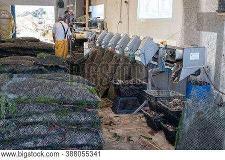 Noirmoutier , Vendee / France - 06 14 2020 : Men Worker In Oyster Farm Ranging Cages Sorting Oysters