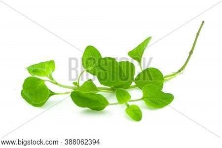 Watercress Vegetable An Isolated On White Background