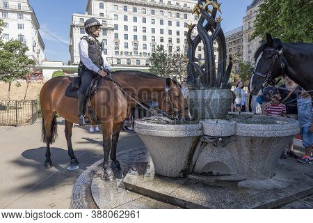 London, United Kingdom - July 23: London Police Horse Drinking Water In Diana Fountain, Green Park L