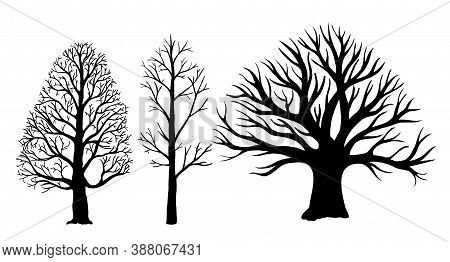 Trees Without Leaves Silhouettes. Vector Bare Tree Silhouettes. Dead Tree Without Leaves.
