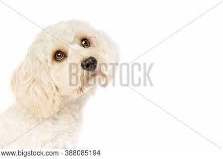 White Mixed Breed Dog