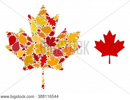 Maple Leaf Mosaic Icon Designed For Fall Season. Vector Maple Leaf Mosaic Is Constructed From Random