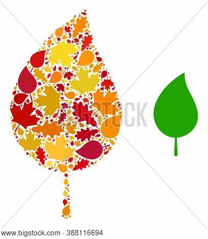 Floral Leaf Mosaic Icon Combined For Fall Season. Vector Floral Leaf Mosaic Is Organized From Random