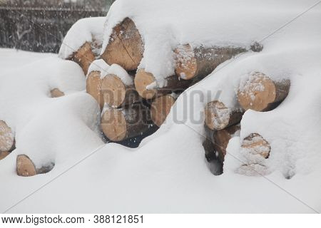Felled Trees Under The Snow. Raw Materials For The Woodworking Industry. Wood Storage In The Open Ai