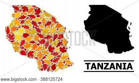 Mosaic Autumn Leaves And Usual Map Of Tanzania. Vector Map Of Tanzania Is Organized With Scattered A