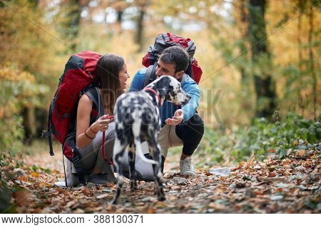 Couples hiking together with a dog; Spring or autumn hiking in nature; camping, travel, tourism,lifestyle,  hike and people concept. Quality active family time together.