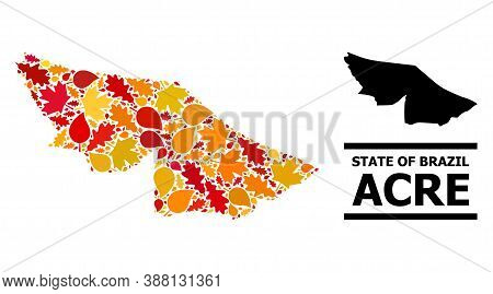 Mosaic Autumn Leaves And Usual Map Of Acre State. Vector Map Of Acre State Is Organized Of Random Au
