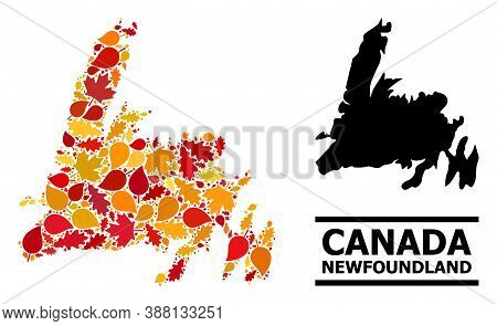 Mosaic Autumn Leaves And Solid Map Of Newfoundland Island. Vector Map Of Newfoundland Island Is Orga