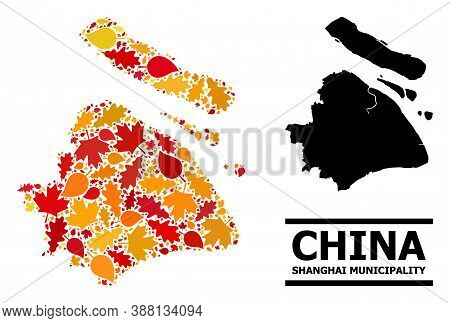 Mosaic Autumn Leaves And Usual Map Of Shanghai Municipality. Vector Map Of Shanghai Municipality Is