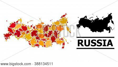 Mosaic Autumn Leaves And Usual Map Of Russia. Vector Map Of Russia Is Composed Of Random Autumn Mapl