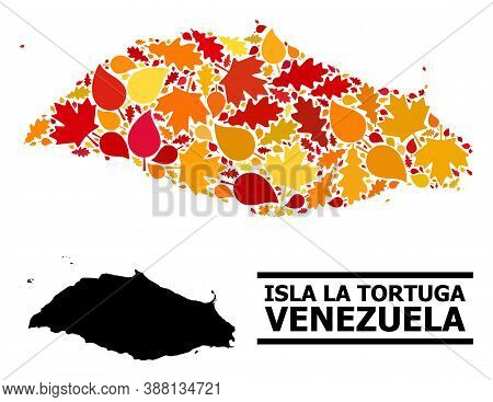 Mosaic Autumn Leaves And Solid Map Of Isla La Tortuga. Vector Map Of Isla La Tortuga Is Designed Of
