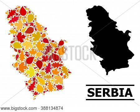 Mosaic Autumn Leaves And Solid Map Of Serbia. Vector Map Of Serbia Is Shaped From Random Autumn Mapl