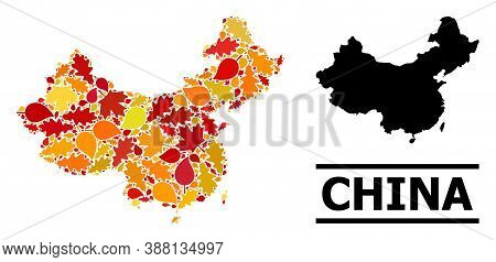 Mosaic Autumn Leaves And Solid Map Of China. Vector Map Of China Is Composed With Random Autumn Mapl