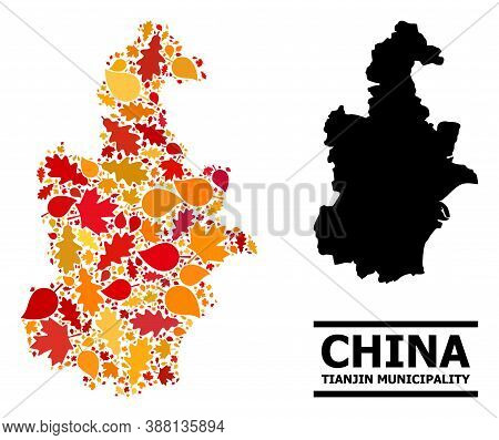 Mosaic Autumn Leaves And Usual Map Of Tianjin Municipality. Vector Map Of Tianjin Municipality Is Ma