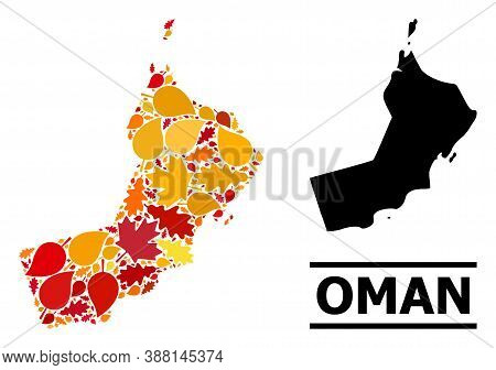 Mosaic Autumn Leaves And Solid Map Of Oman. Vector Map Of Oman Is Organized From Randomized Autumn M
