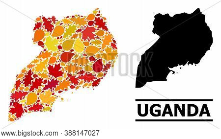 Mosaic Autumn Leaves And Solid Map Of Uganda. Vector Map Of Uganda Is Formed From Scattered Autumn M