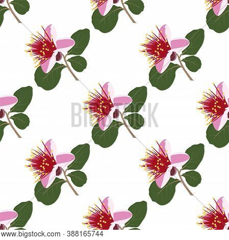 Botanical Seamless Vector Pattern With Feijoa Flowers.