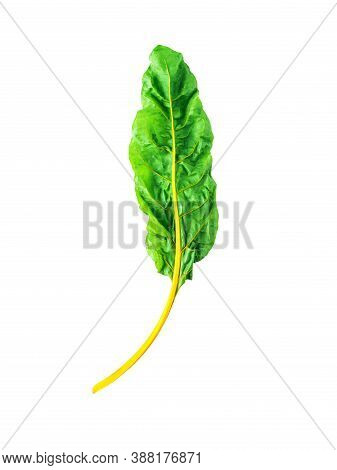 One Swiss Chard Leaf Isolated On White Background. Fresh Swiss Rainbow Chard With Yellow And Green C