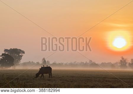 Sunrise With Sunlight Soft Colors Morning And Bright Sunshine In Winter On Fog Background