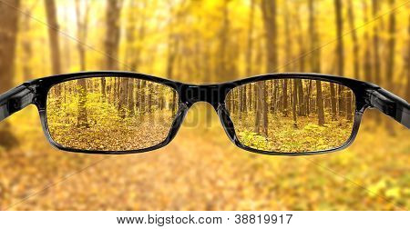 Clear forest in glasses on the background of blurred forest