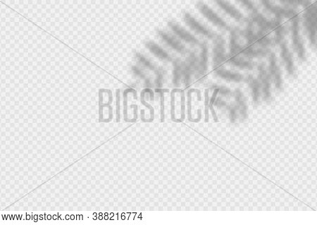 Shadow Overlay Palm Branch. Transparent Overlay Shadow Effect From Palm Tree Leaves. Realistic Soft