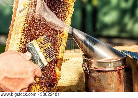 Close-up Beekeeper Uncapping Honeycomb With Special Beekeeping Fork. Raw Honey Being Harvested From