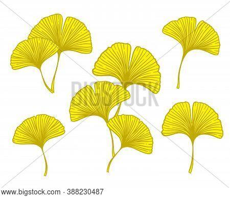 Autumn Ginkgo Or Gingko Biloba Branches And Leaves Set. Nature Botanical Fall Vector Illustration, H